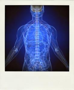 body+energy-systems-pola
