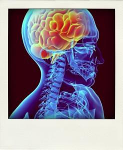 Neuroscience-pola